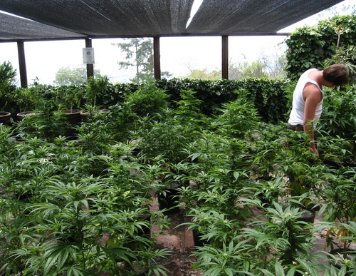 Pinoleville Pomo Nation marijuana farm appears to be on hold