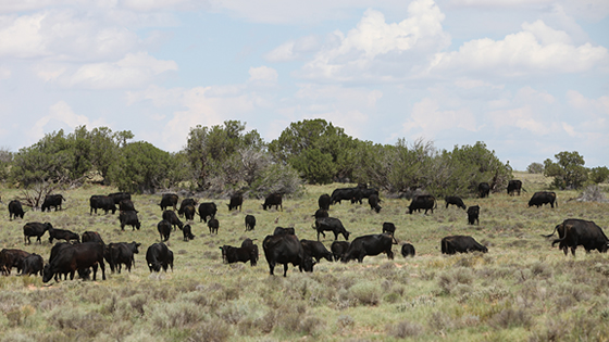 Distributor brings beef produced on reservations to the market