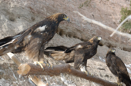 Navajo Nation's zoo helps provide eagle feathers to members