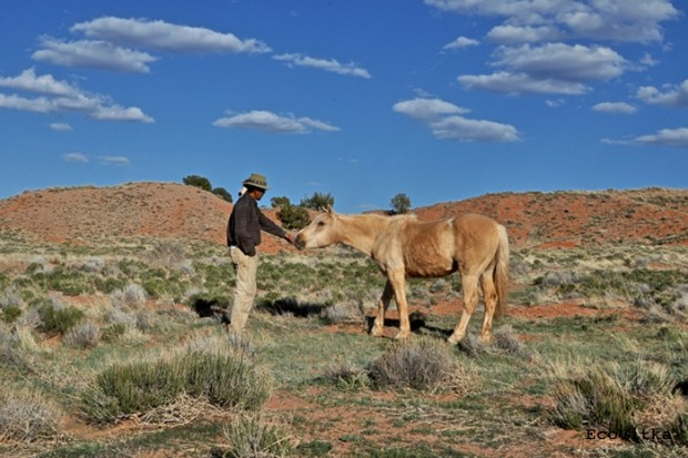 Navajo Nation works on agreement to address horse population