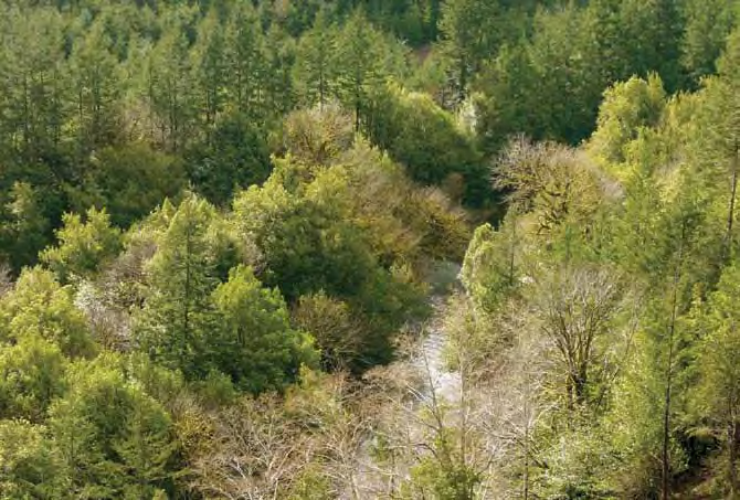 Coquille Tribe completes acquisition of 3,200 acres of forestland