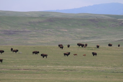 Landowners on Fort Peck Reservation see $54M in Cobell offers
