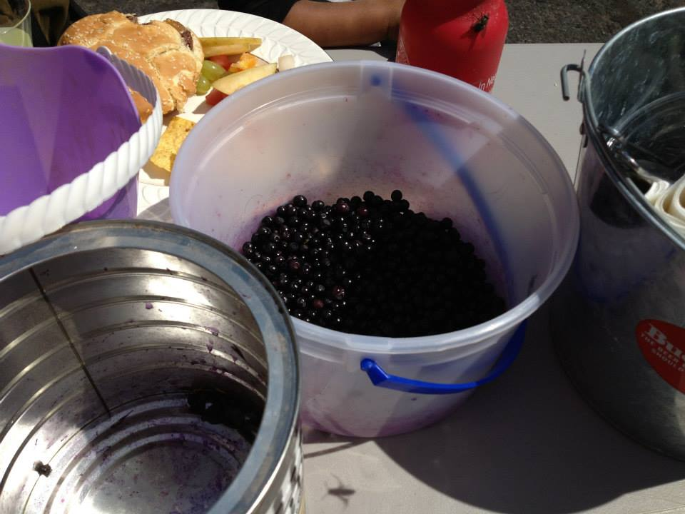 Warm Springs Tribes welcome early start to huckleberry season