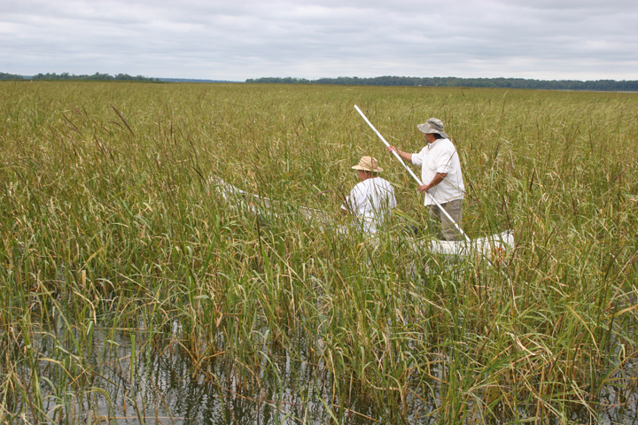 Tribal members in Minnesota assert treaty right to gather wild rice