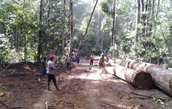 Tribes in Amazon rainforest defend homelands from illegal loggers