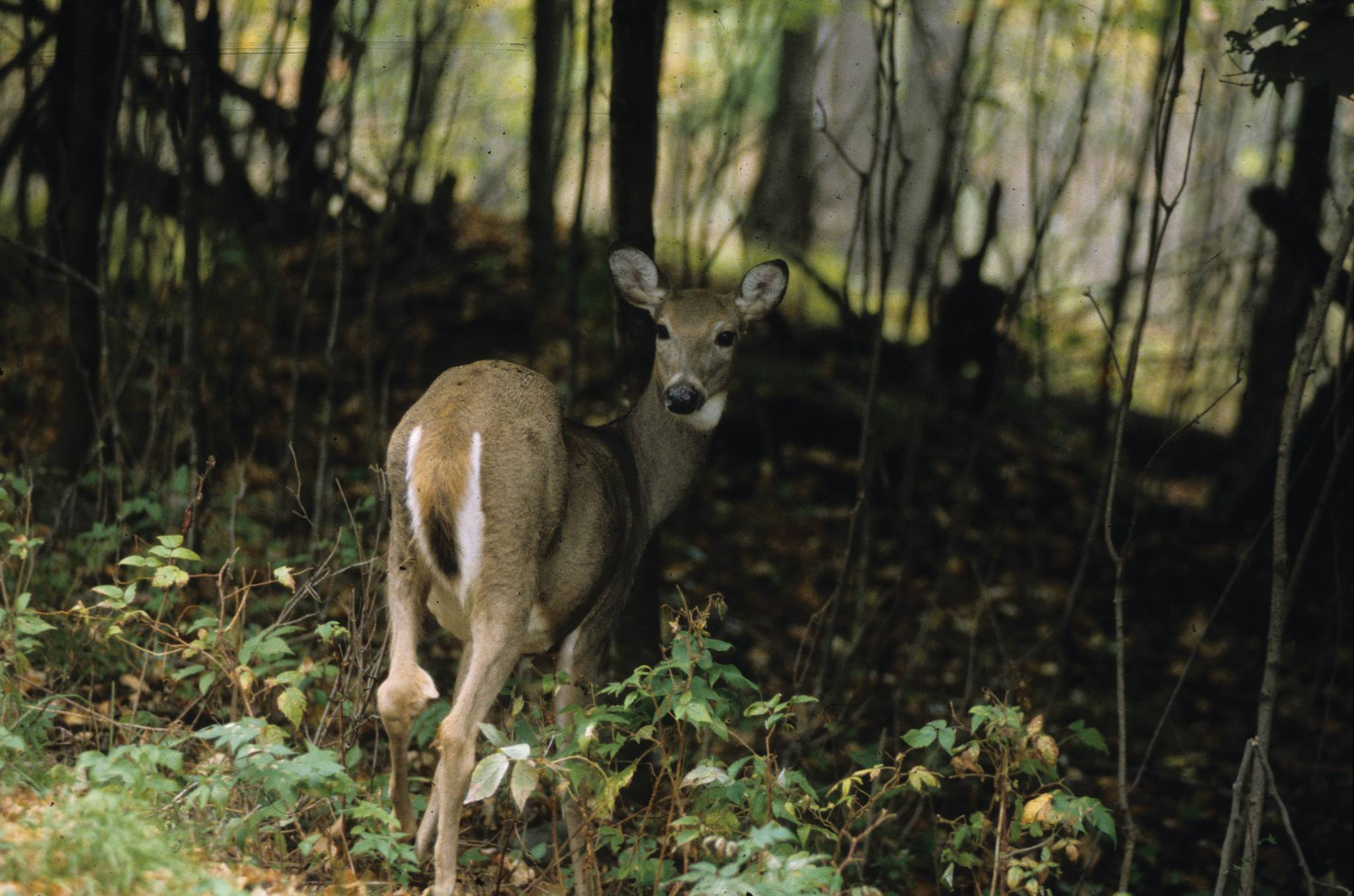Judge sides with tribes in hunting rights dispute in Wisconsin