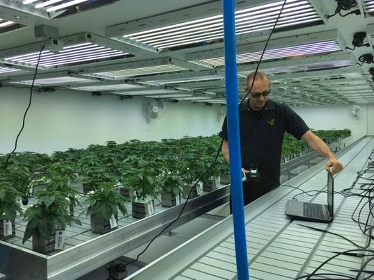Flandreau Santee Sioux Tribe shows marijuana facility to lawmakers