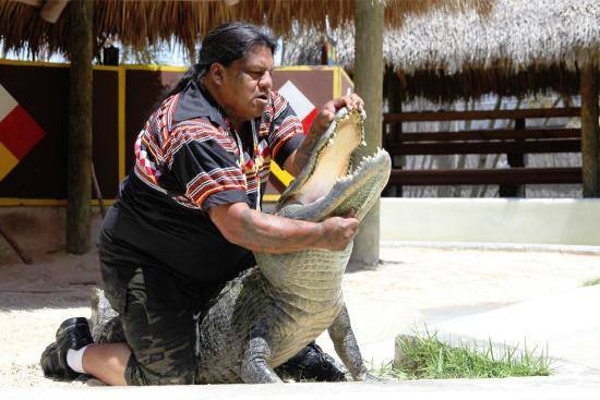 Miccosukee Tribe's alligator wrestler retires after three decades
