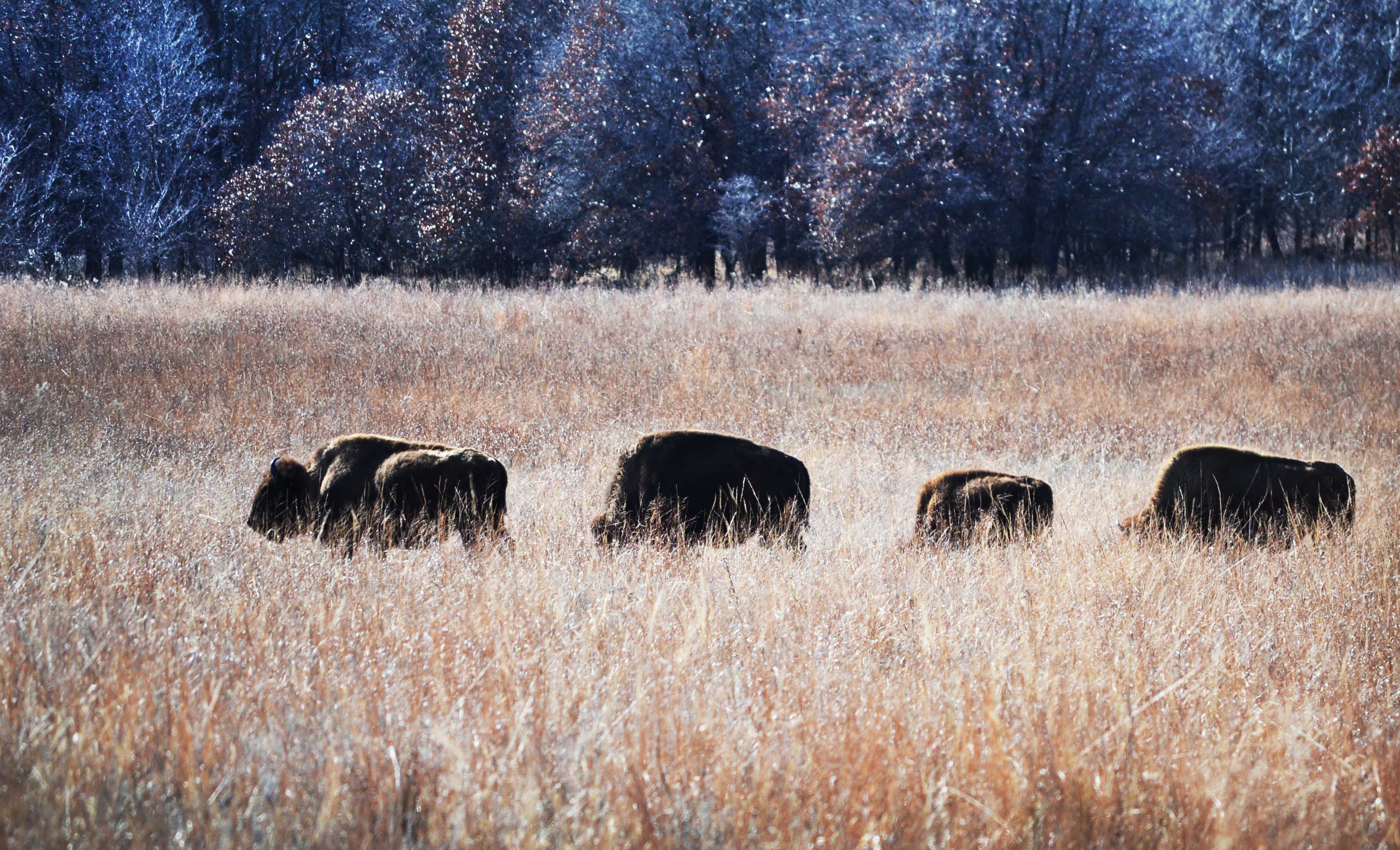 Osage Nation finalizes purchase of big ranch property for $74M