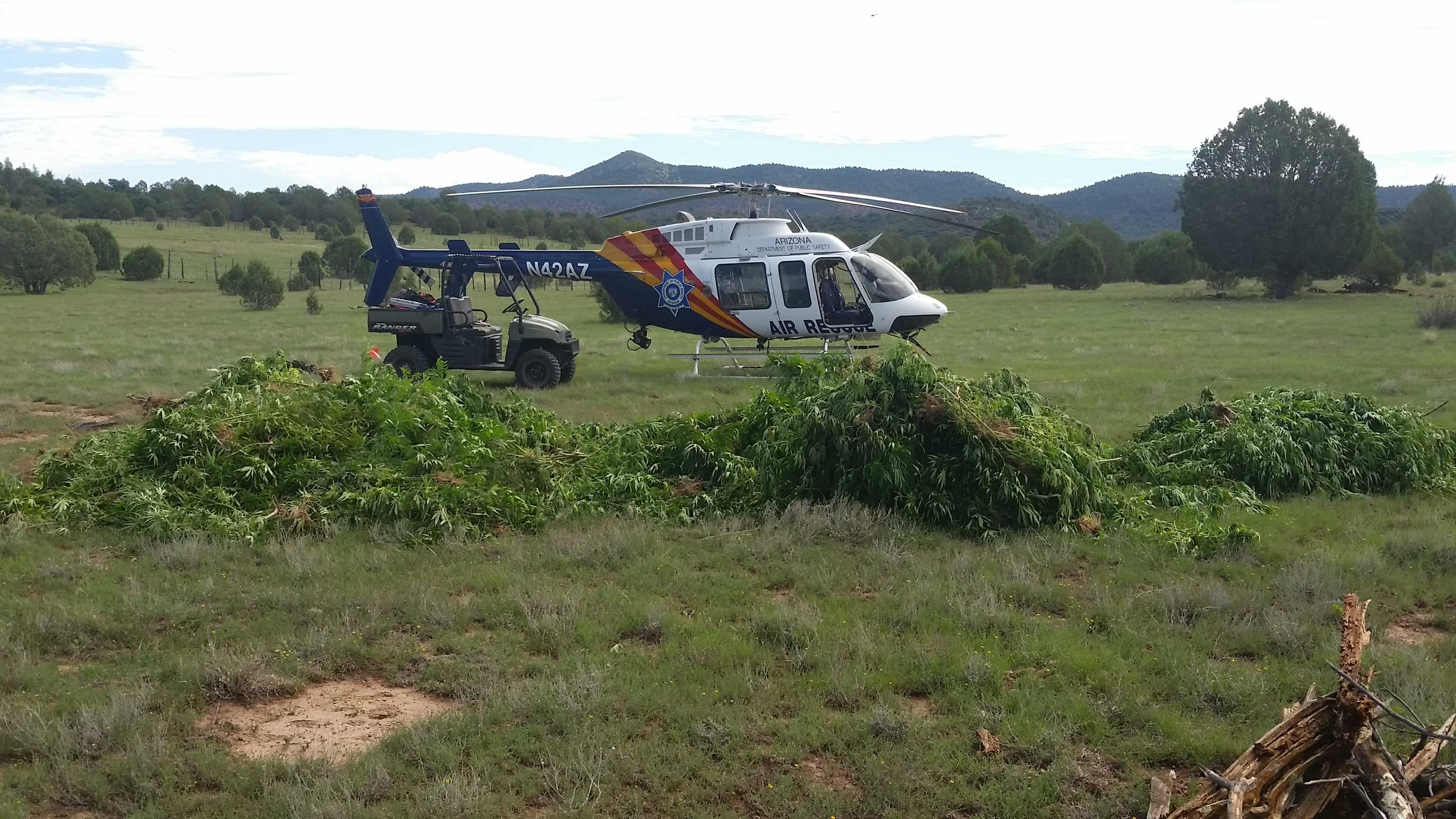 White Mountain Apache Tribe helps bust big marijuana operation