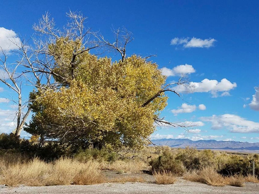 Fallon Paiute-Shoshone Tribe finally reclaims ancestral remains