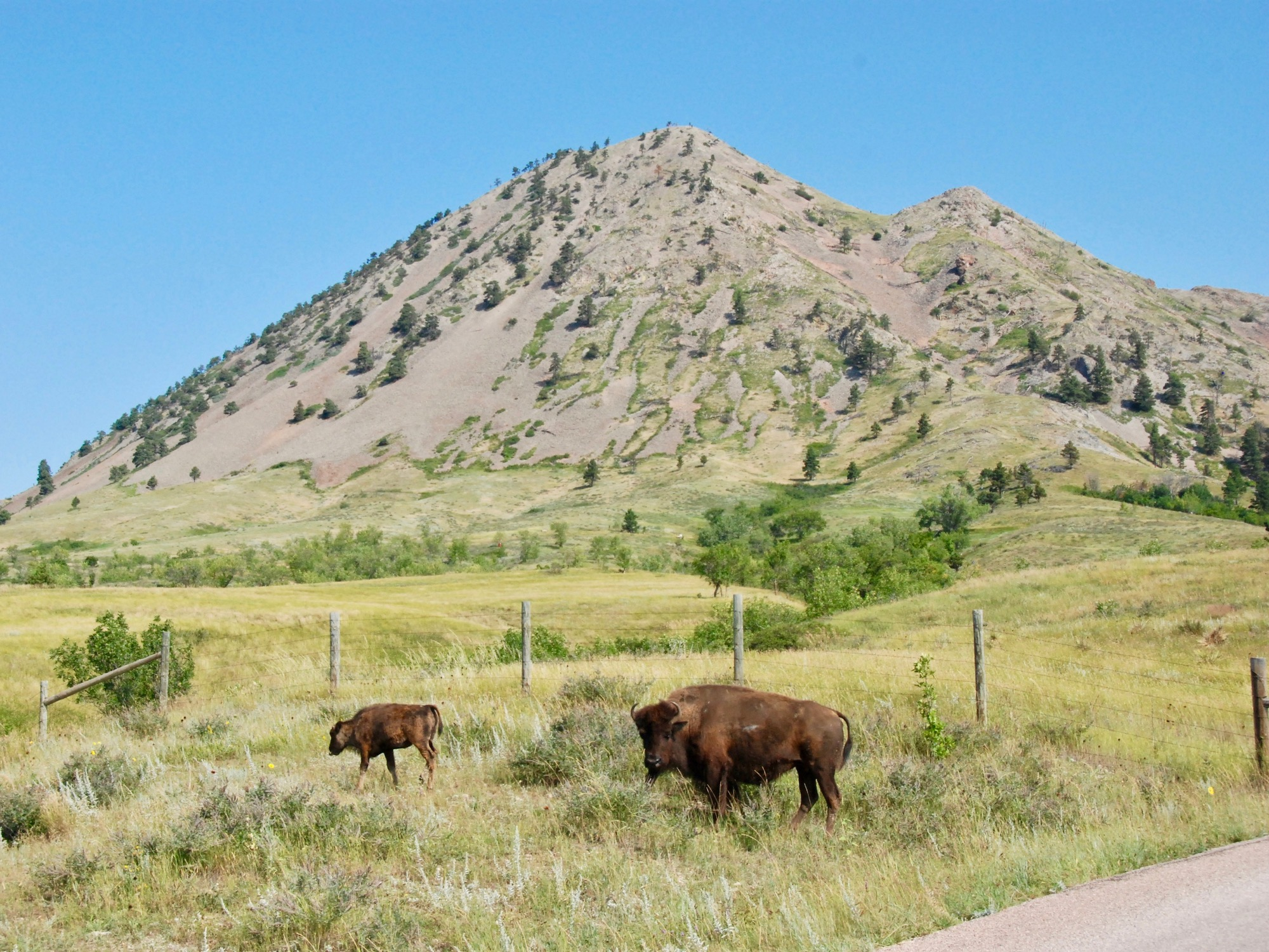 Lakota Country Times: Tribes unite to buy sacred Bear Butte land