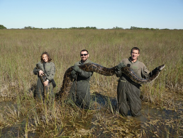 Miccosukee Tribe shuts door to research on invasive python species