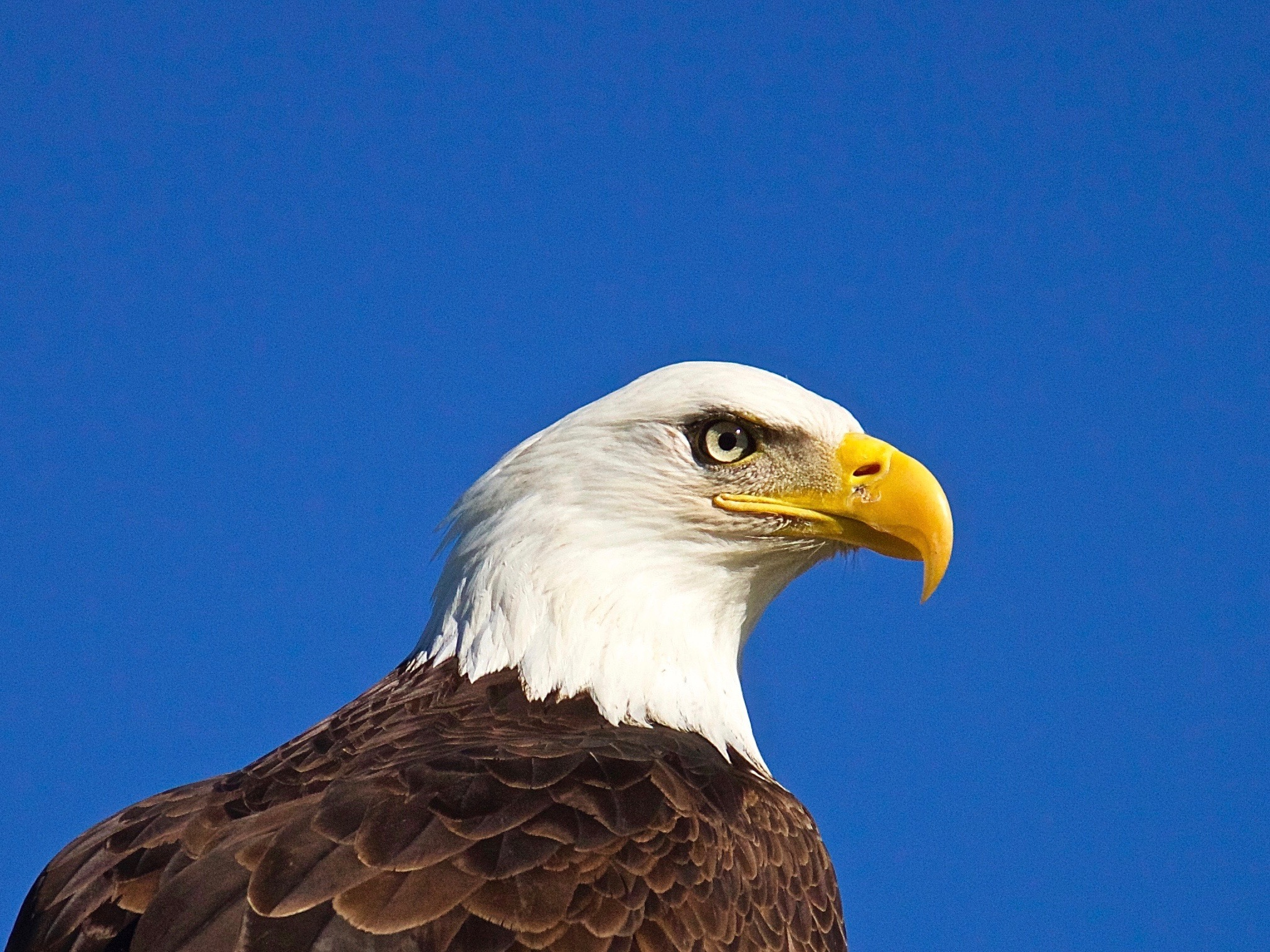 Prosecutors announce charges against 15 for trafficking of eagles