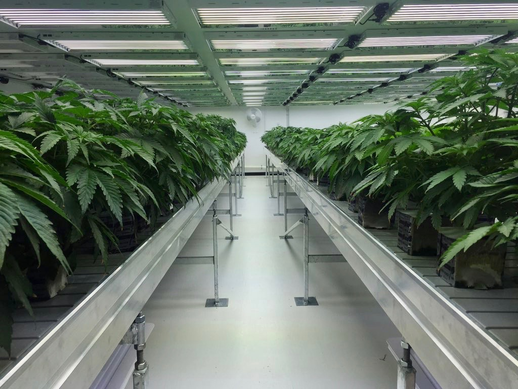 Marijuana firm promises big investments with help of ex-Seminole leader
