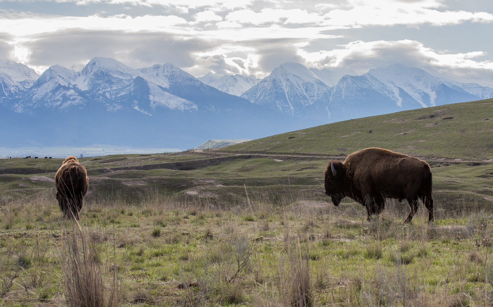 Confederated Salish and Kootenai Tribes dealt setback on National Bison Range