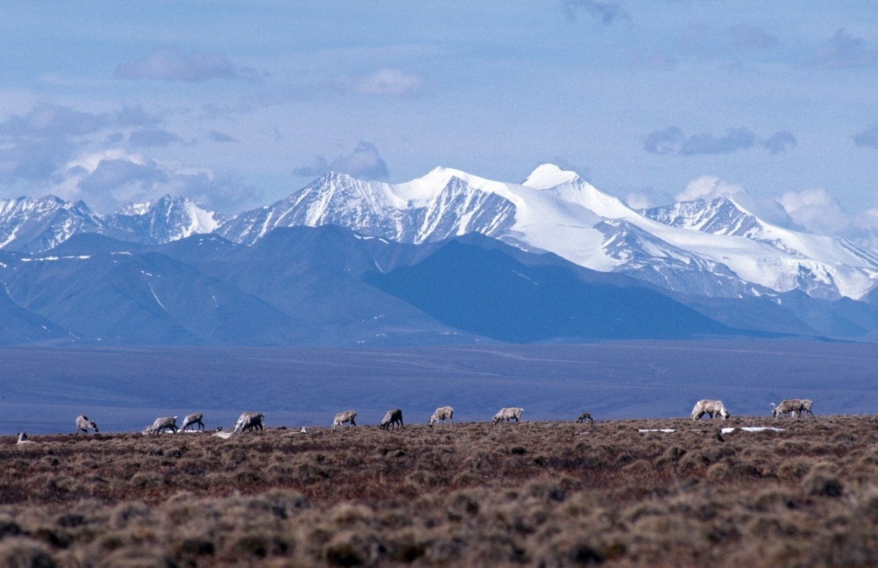 Republican campaign for Arctic refuge drilling puts Alaska Native divisions on display again