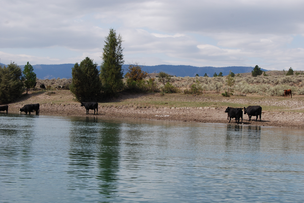 Confederated Salish and Kootenai Tribes water compact survives legal challenge