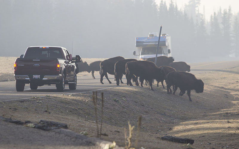 Cronkite News: Hunters may be called into reduce bison herd at Grand Canyon
