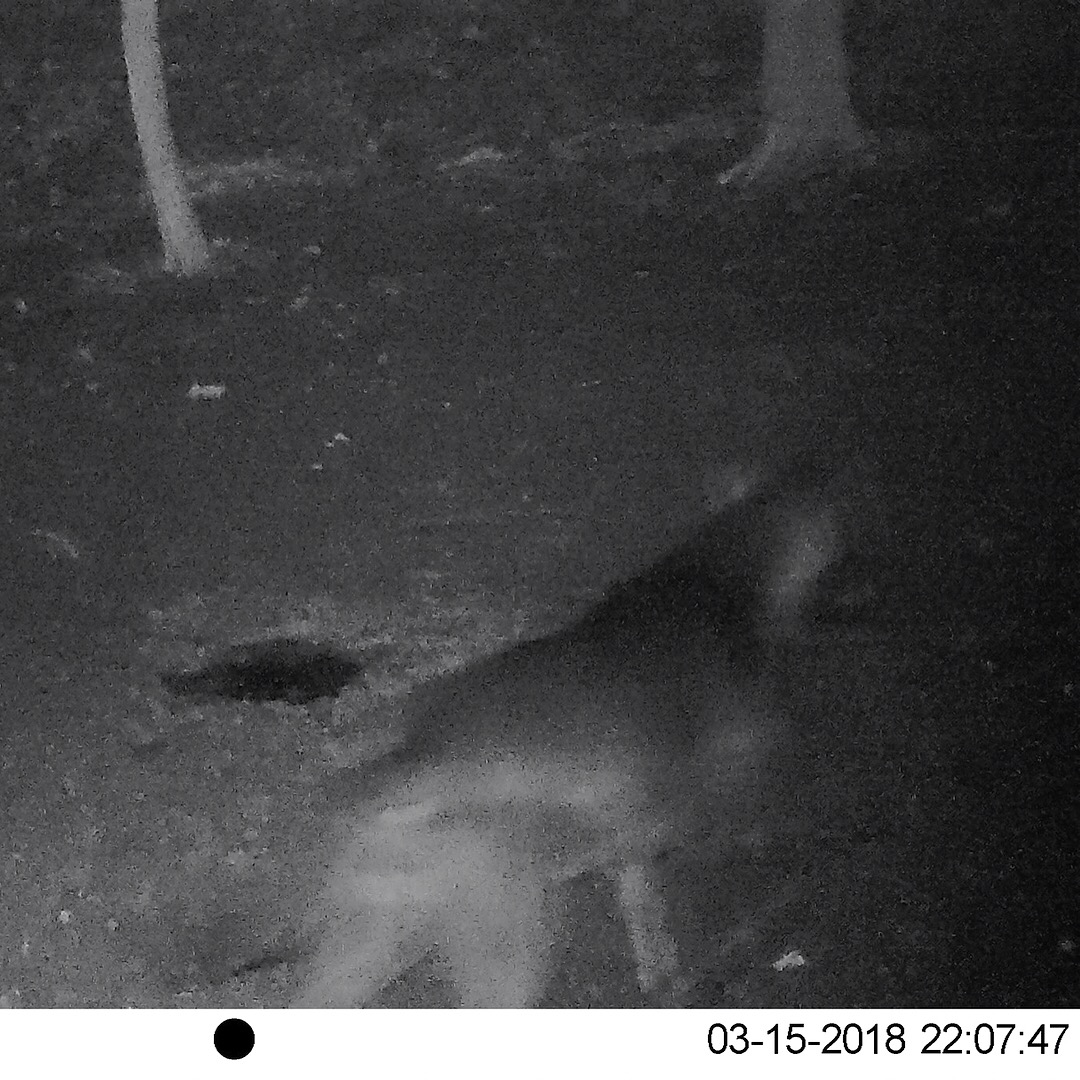 Winnebago Tribe confirms first sighting of mountain lion in decades