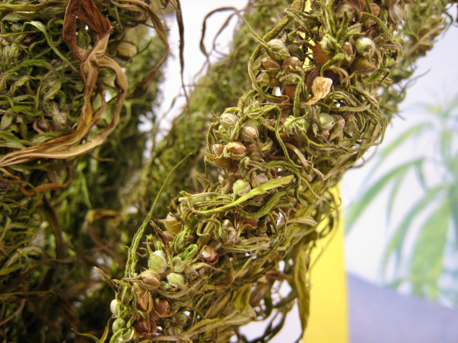 St. Croix Chippewa Tribe wins agreement over hemp and state jurisdiction