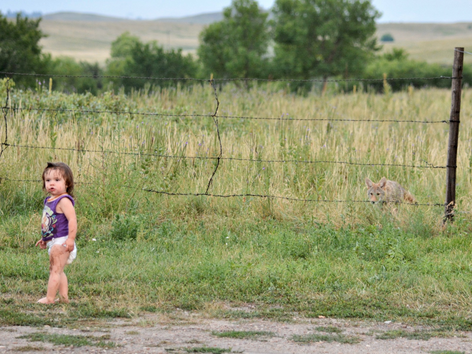 'He's protecting us': Pine Ridge family adopts coyote