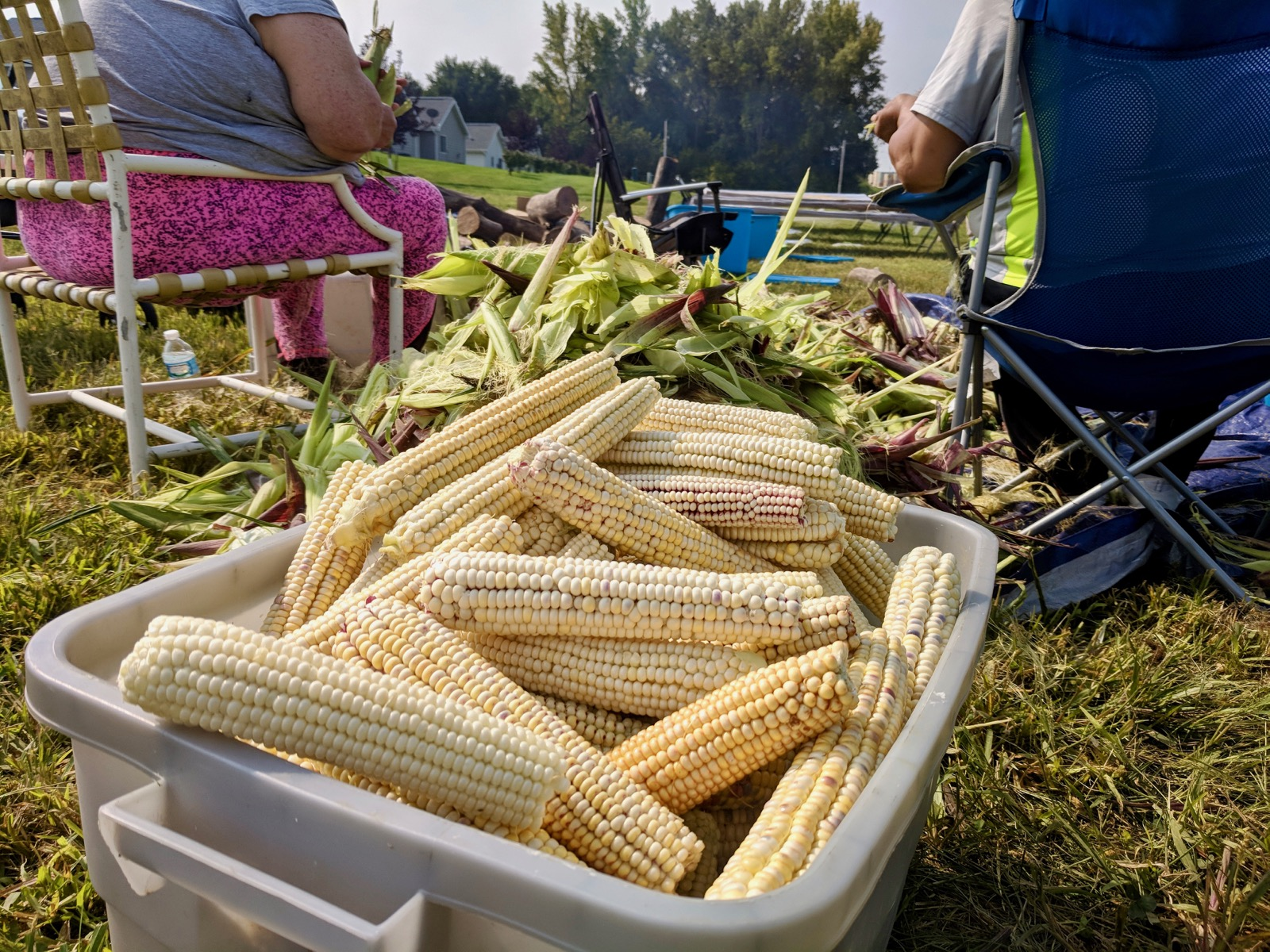Winnebago Tribe turns to tradition with annual corn harvest