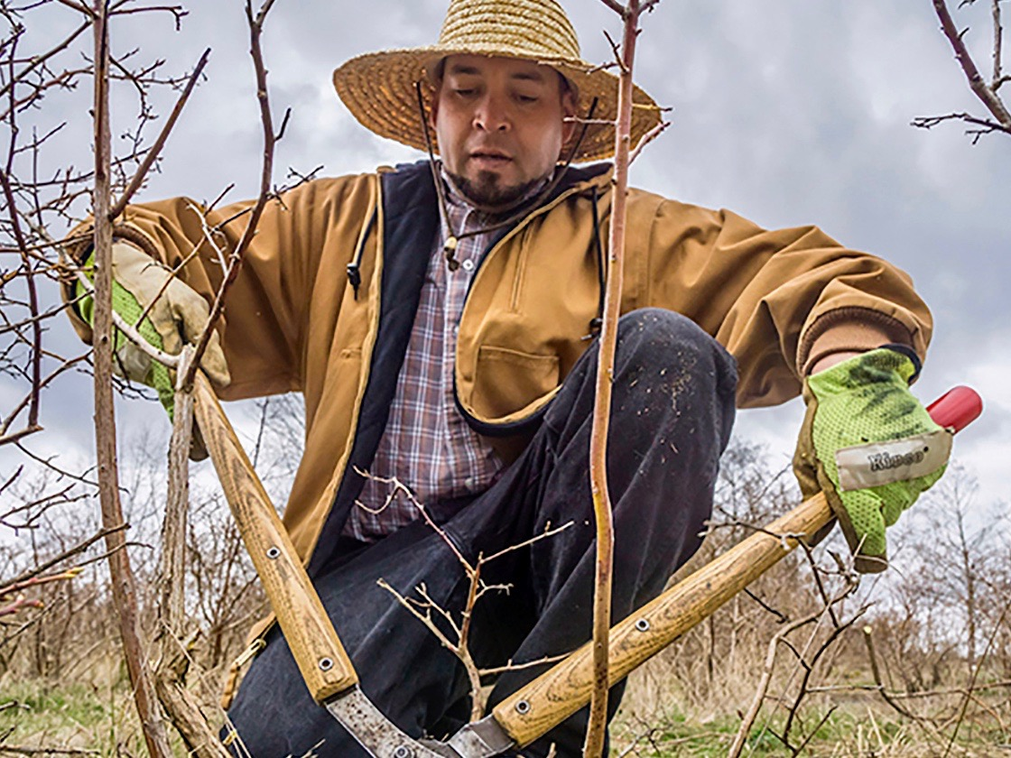Indigenous farmworkers fight for fair working conditions