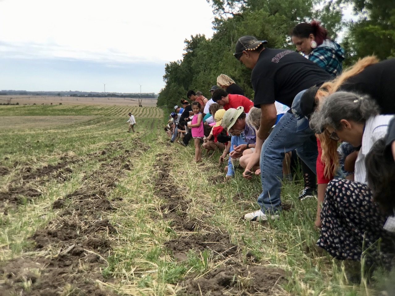 'Seeds of resistance': Ponca corn planted in path of Keystone XL Pipeline