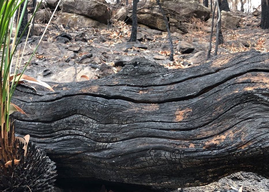 Strength from perpetual grief: how Aboriginal people experience the bushfire crisis