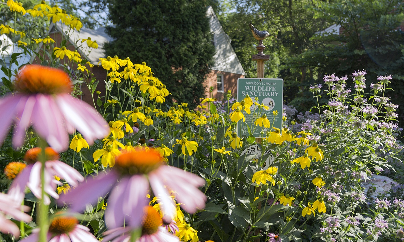 YES! Magazine: How to turn your yard into an ecological oasis