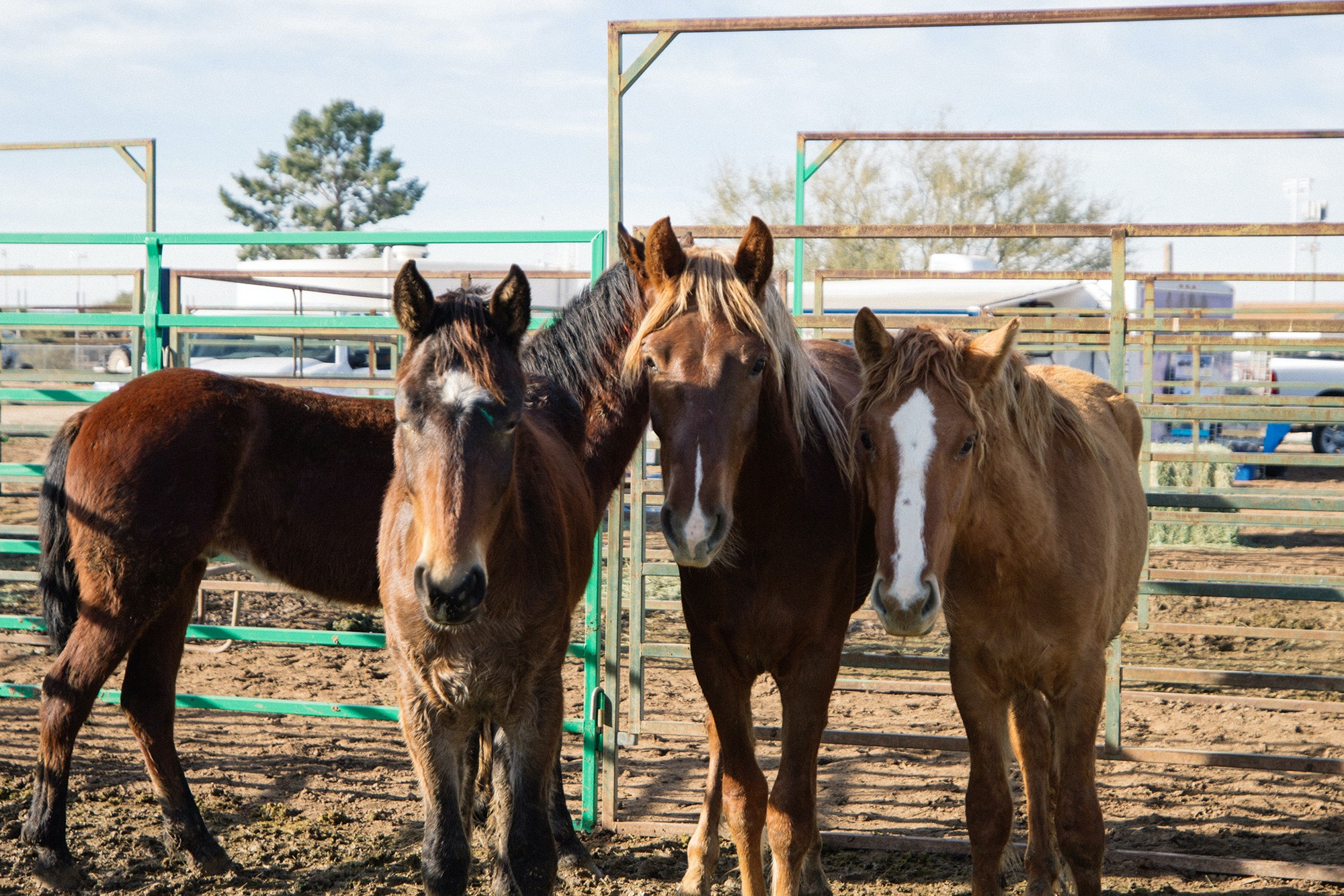 Feds offer financial incentive to help find homes for wild horses and burros